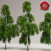 3d model low-poly birch trees