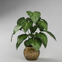 plant_40
