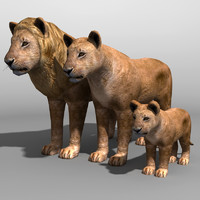 lion family 3d obj