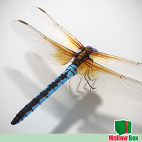 dragonfly animation 3d model