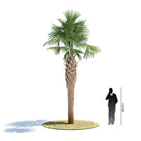 exotic tree sabal palmetto 3d model