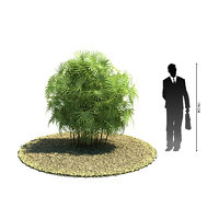 3d exotic tree rhapis excelsa model