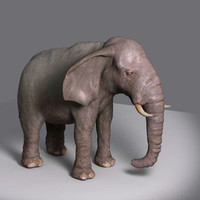 3d elephant movie