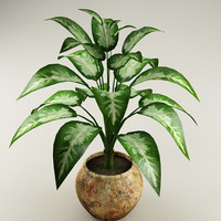 plant_37
