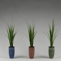 plant_38