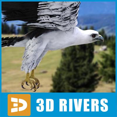 bellied_sea_eagle_logo.jpg