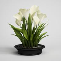 3d model plant