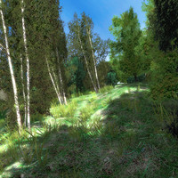 Forest Meadow Game Ready Landscape