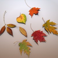 3d model autumn leaves