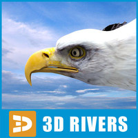 Bald eagle by 3DRivers