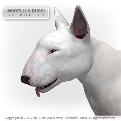 BullTerrier-HQ-shade-01.jpg