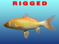 3d rigged gold fish
