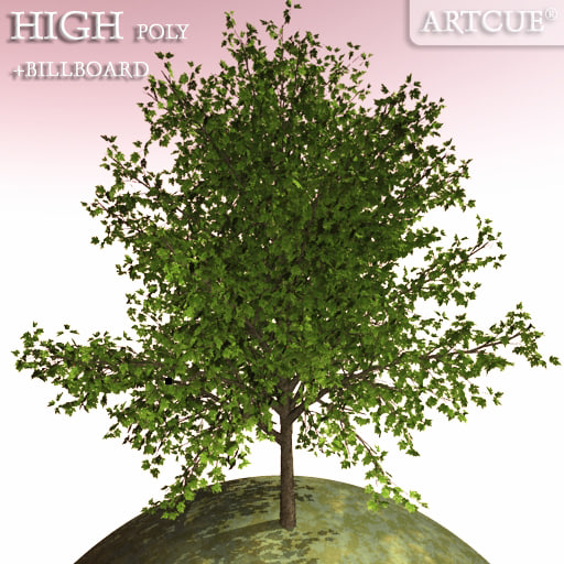 tree_046_main.jpg