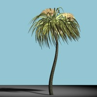 Cabbage Tree (New Zealand)