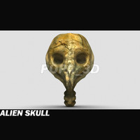 alien skull 3d model
