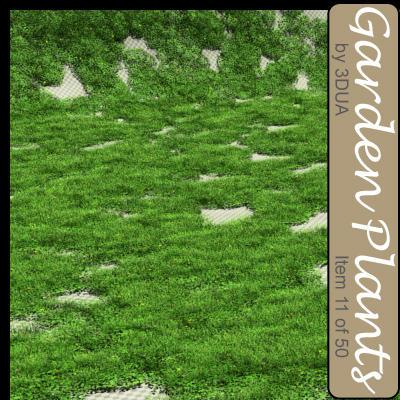 011_grass