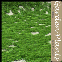 3ds max grassy plant grass 011