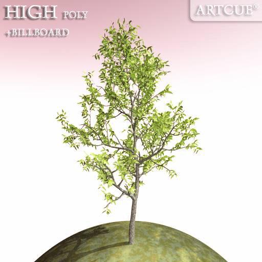 tree_032_main.jpg