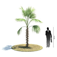 exotic tree zombia antillarum 3d 3ds