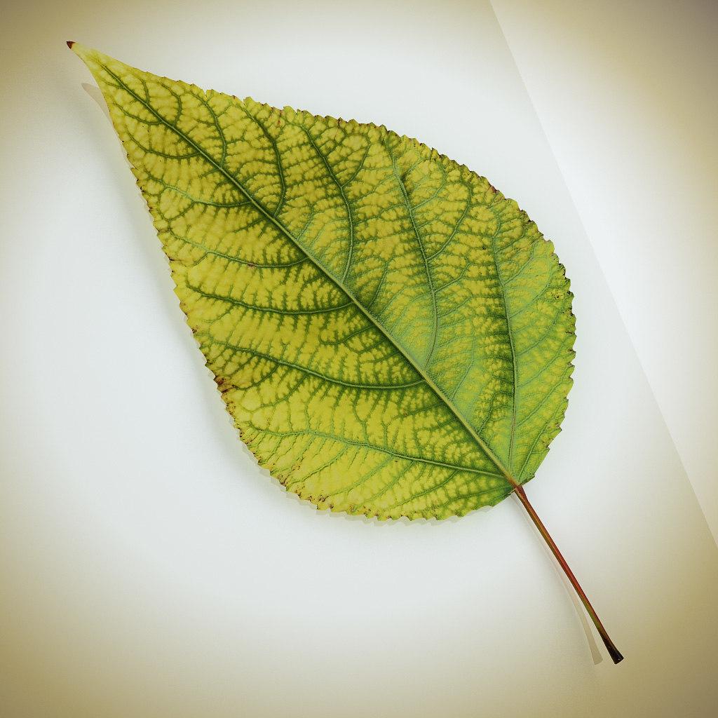 Leaf_yellow_01.jpg