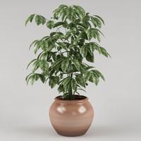 plant_41