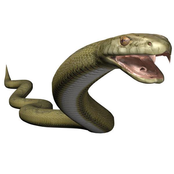 anaconda1.jpg