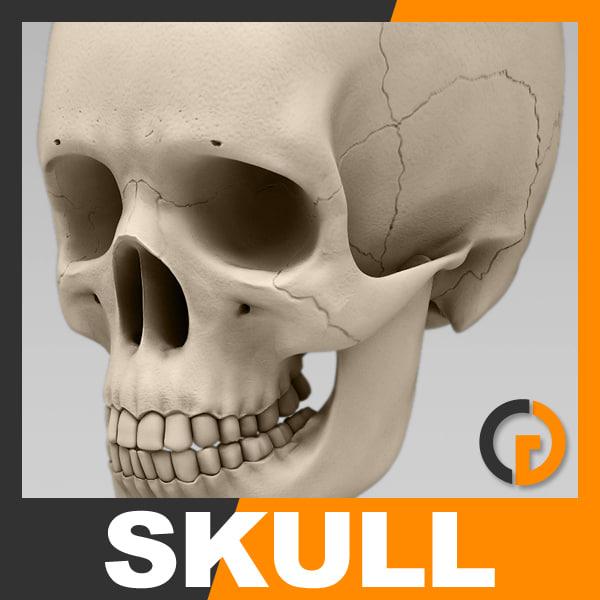 Skull_th01.jpg