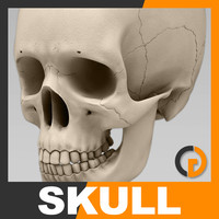 human skull - nose anatomy 3d model