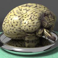 human brain ma free