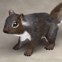 squirrel fur - 3ds