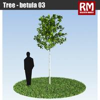 Tree - betula 03