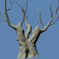 Tree Dry 1