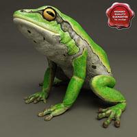 Frog Hyla Arborea