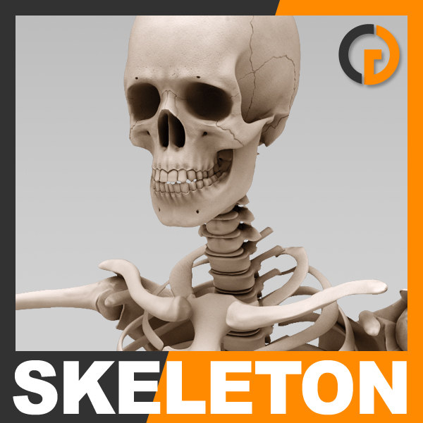 Skeleton_th01.jpg