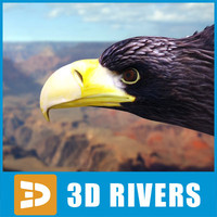 "Steller""s sea eagle by 3DRivers"