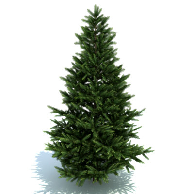 3d tree plant - Fir... by FraP