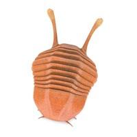 3d asaphus trilobite model