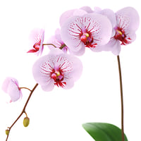 Flower Orchid splash