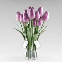 ma plant tulip