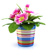 3d realistic flower pot