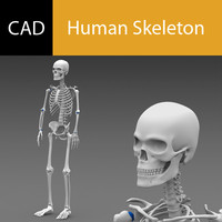 3d model poseable human skeleton cad
