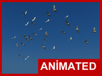 Realistic animated flying bird flock
