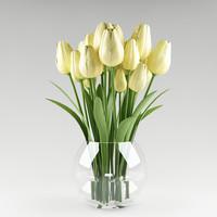 plant tulip max