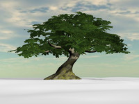 3d model of ancient oak tree