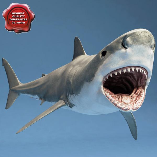 Shark_Rigged_00.jpg