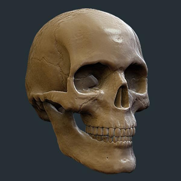 Skull_08.jpg