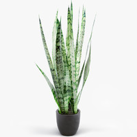 potted houseplant sansevieria plant max