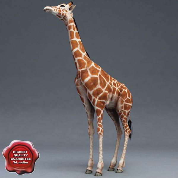 Giraffe_00.jpg