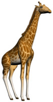 3d model of giraffe