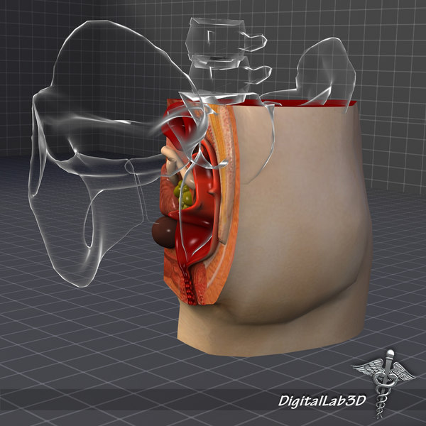 brain anatomy 3d model - Rectum-Anus Anatomy... by digitallab3d